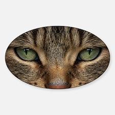 Tabby Cat Face Decal