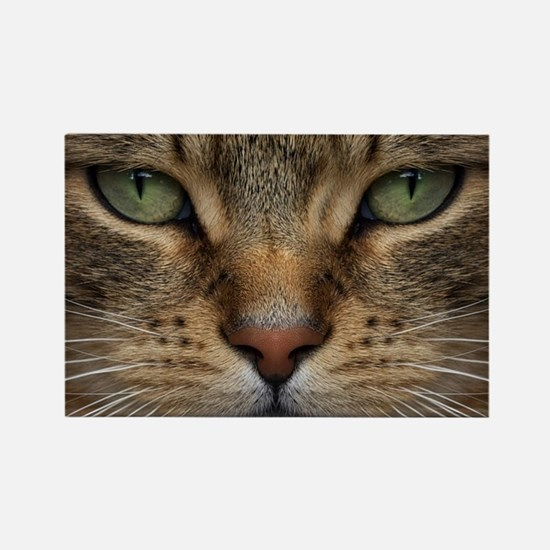 Tabby Cat Face Rectangle Magnet