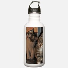 CUTE KITTIES Water Bottle