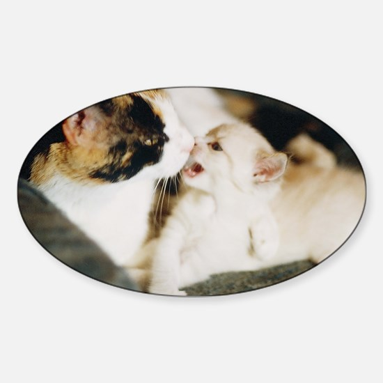 CALICO CAT AND WHITE KITTY Sticker (Oval)