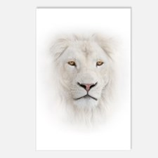 White Lion Head Postcards (Package of 8)