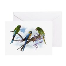 Macaw Parrots Greeting Card