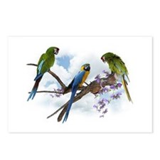 Macaw Parrots Postcards (Package of 8)