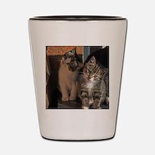 CUTE KITTIES Shot Glass