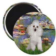 Cute White poodle Magnet