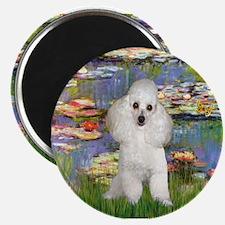 Unique White poodle art Magnet