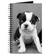 Boston Terrier puppies Journal