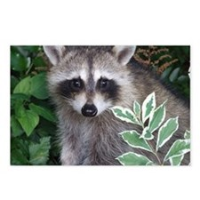 Baby Raccoon Photo Postcards (Package of 8)