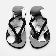 Boston Terrier puppies Flip Flops