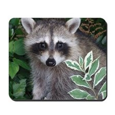 Baby Raccoon Photo Mousepad