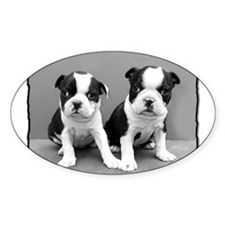 Boston Terrier puppies Decal