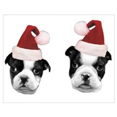 Christmas Boston Terriers Poster