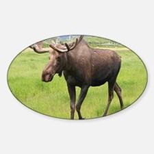 Alaskan moose with antlers 2 Decal
