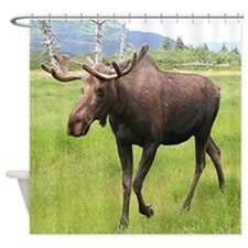 Alaskan moose with antlers 2 Shower Curtain