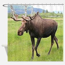Alaskan moose with antlers 2 Shower Curtain