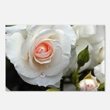 Rose20151101 Postcards (Package of 8)