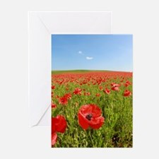 Poppy Field PRO PHOTO Greeting Cards