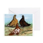 Shortfaced Tumbler Pigeons Greeting Cards (Pk of 1