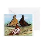 Shortfaced Tumbler Pigeons Greeting Card