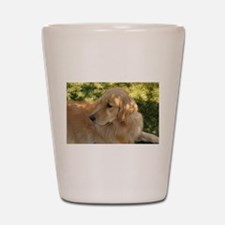 golden retriever grass Shot Glass