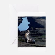 sea lion and rock cave Greeting Cards