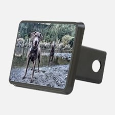 Funny Labrador playing Hitch Cover