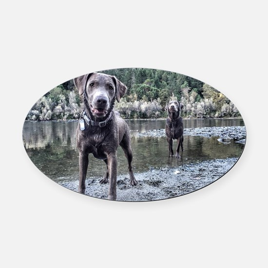Funny Labrador playing Oval Car Magnet