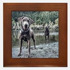 Cute Labrador retriever Framed Tile