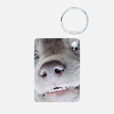 Cute Chocolate labrador puppy Keychains