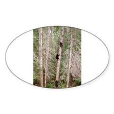 black bears 2007 Oval Decal