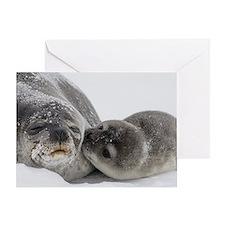 Cute Baby seals Greeting Card