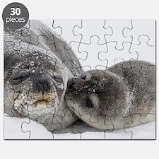 Cute Seals Puzzle