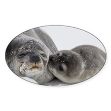 Seal Pup Kisses Mom Decal