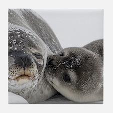 Seal Pup Kisses Mom Tile Coaster