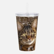 Cat002 Acrylic Double-wall Tumbler