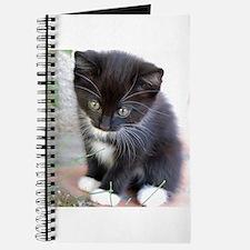 Cat003 Journal
