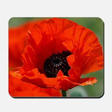 Beautiful Red Poppy Mousepad