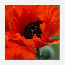 Beautiful Red Poppy Tile Coaster