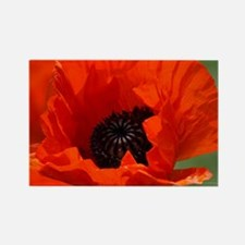 Beautiful Red Poppy Magnets