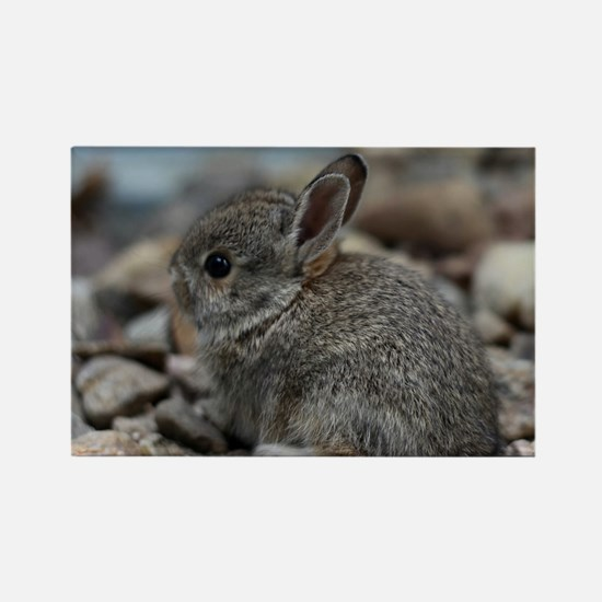 SMALL BABY BUNNY Rectangle Magnet