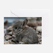 SMALL BABY BUNNY Greeting Cards (Pk of 10)