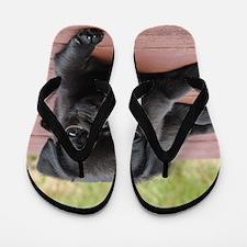 ALERT PUG PUPPY Flip Flops