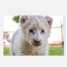 WHITE LION CUB Postcards (Package of 8)