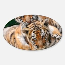 BABY TIGERS Decal