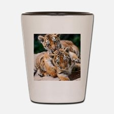 BABY TIGERS Shot Glass