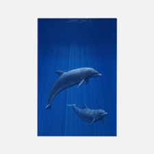 Dolphin Couple Rectangle Magnet
