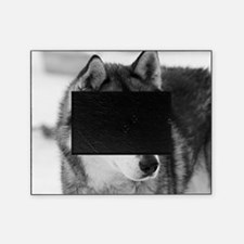 Cute Husky dog Picture Frame
