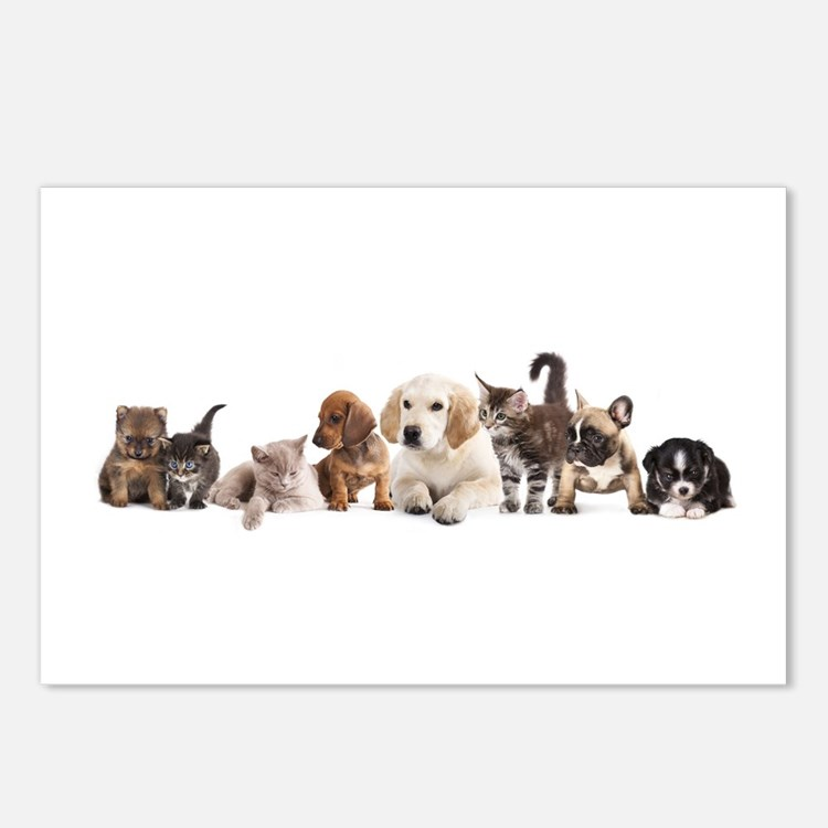 Cute Pet Panorama Postcards (Package of 8)