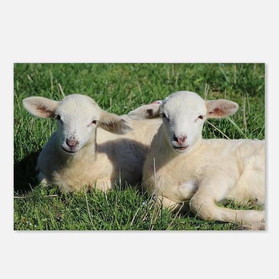 Cute Lamb Postcards (Package of 8)