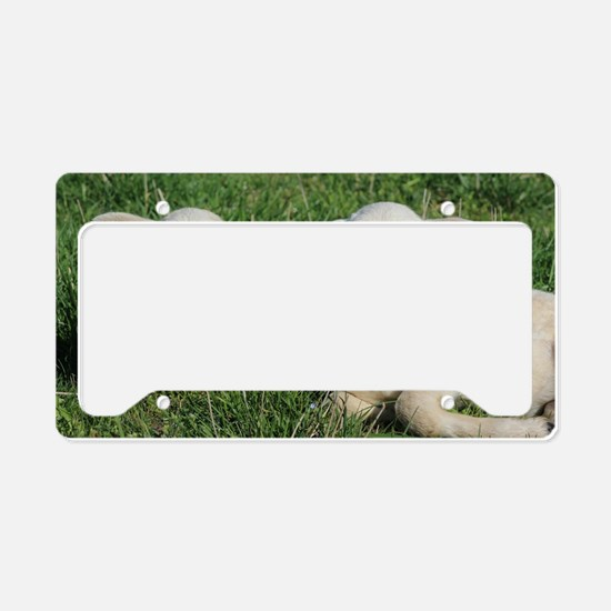 Cute Lamb License Plate Holder
